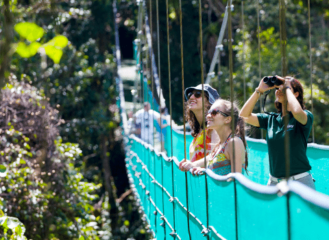 sky walks tours Hanging bridge