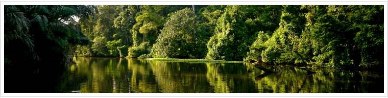 Destination Tortuguero