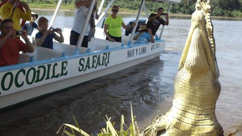 JacoBeachCostaRicaCrocodile