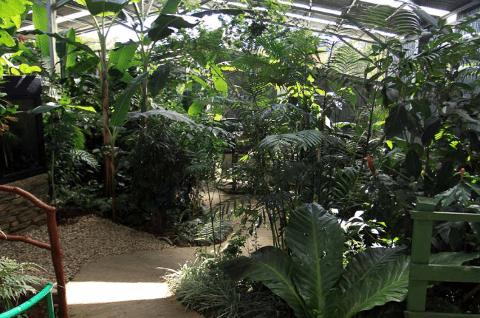 Monteverde-frog-pond-cr