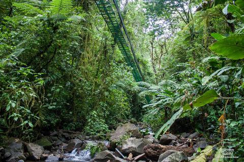 Sky-Walk-Monteverde-River