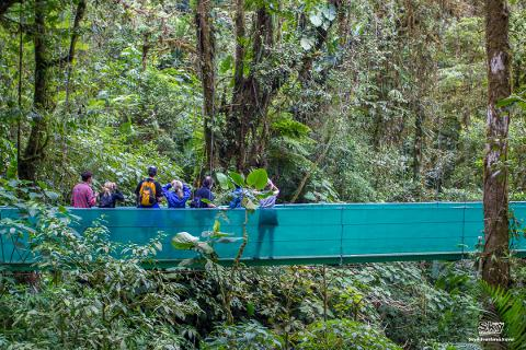 Sky-Walk-Monteverde-brige
