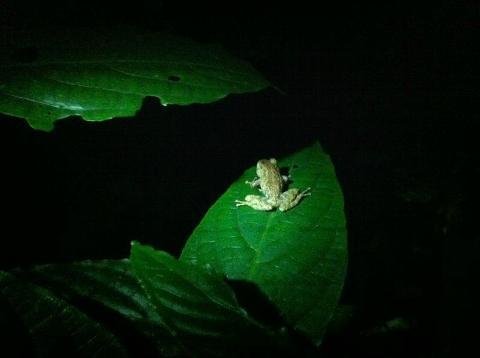 monteverde-night-walk_med