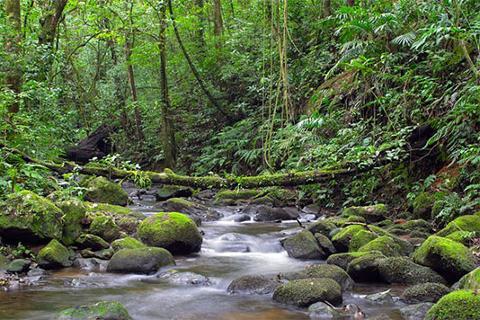 reserva_monteverdeincostarica