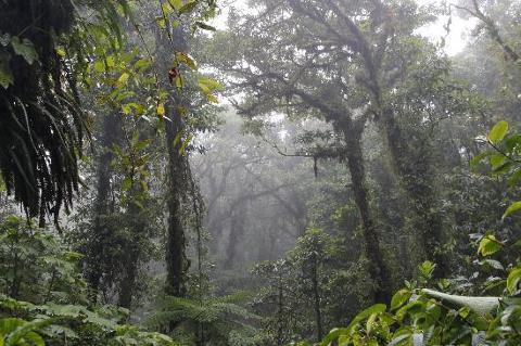 santa-elena-cloud-forest_med