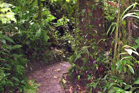 santa-elena-reserve-hiking-trails_med