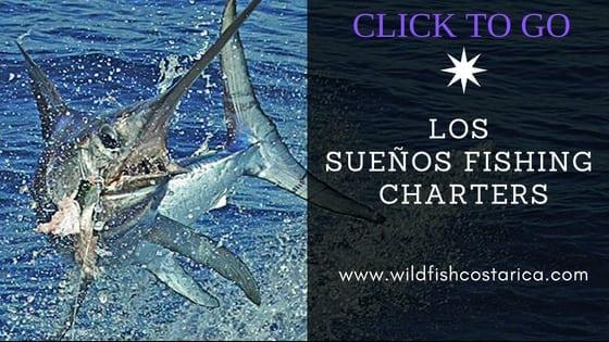 Visit Wild Fish Costa Rica